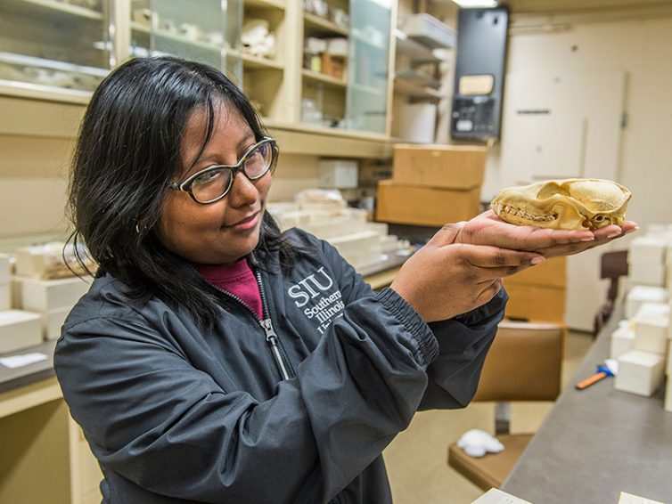 Gray fox research puts undergrad on path of self-discovery