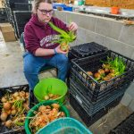 Volunteer cleaning vegetables