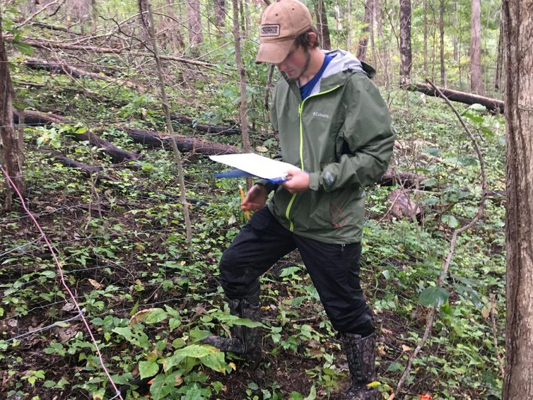 Student works to determine the impact white-tailed deer have on tree regeneration and ecosystems