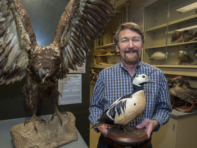SIU zoology collections a treasure for students, researchers