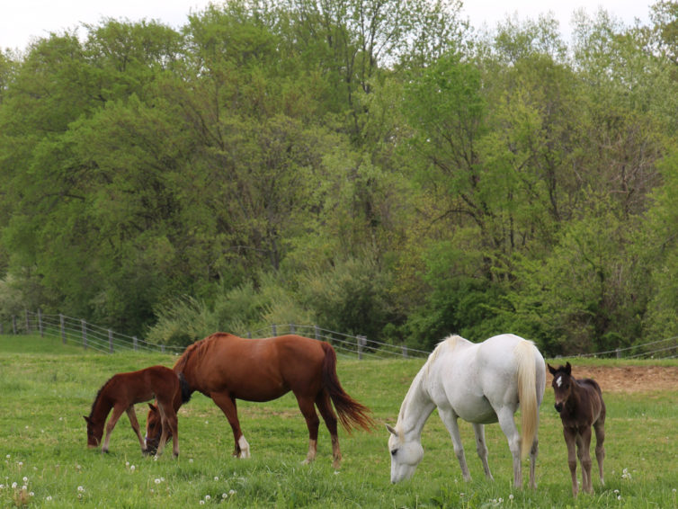 Four new foals join the University Farms family this spring