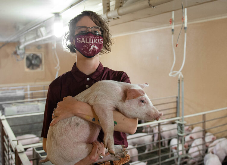 New SIU Swine Center manager focuses on the value of pigs